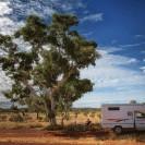 Mittagspause unter Eukalyptus