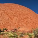 Uluru: Schlafendes Schuppentier in der australischen Wüste