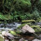 Grüner neuseeländischer Bilderbuchdschungel in den Catlins