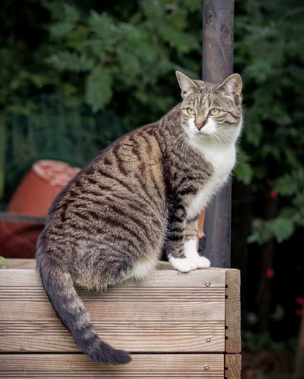 Schattiges Plätzchen mit Übersicht. Unsere Katze Luna auf dem Hochbeet. #catcontent #catsofinstagram #FB