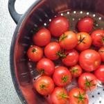 Keine schlechte Ausbeute bei der Tomatenernte. Mitte November. #Tomaten #meingarten #Ernte #fb